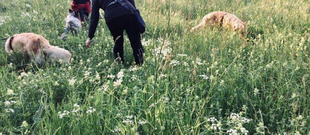 Kräutergassi: Mehr Unkraut in den Hundenapf!